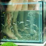 fiskpedikyr morsdagspresent